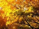 fall3large.jpg