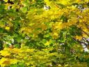 fall6large.jpg