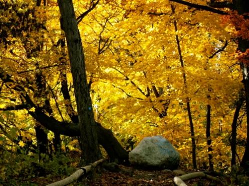 fall9large.jpg
